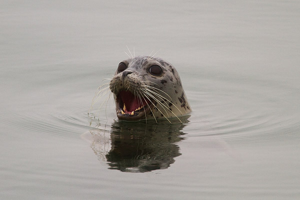 sea otters amp other marine life at moss landing tucey