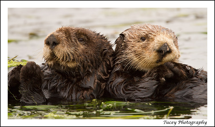 two_otters